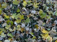 Есен на Карлуково
